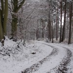 Foret brotonne neige